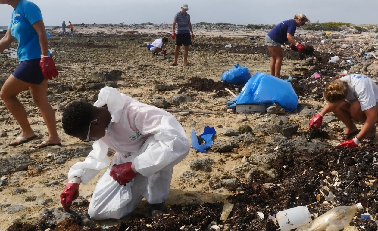 Cleanup efforts taking place on Bonaire's eastern coastlines following the damage of the thick crude oil/tar on flora and fauna