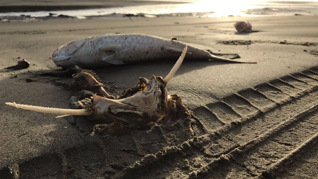 Conservation group demands answers as fish kill returns