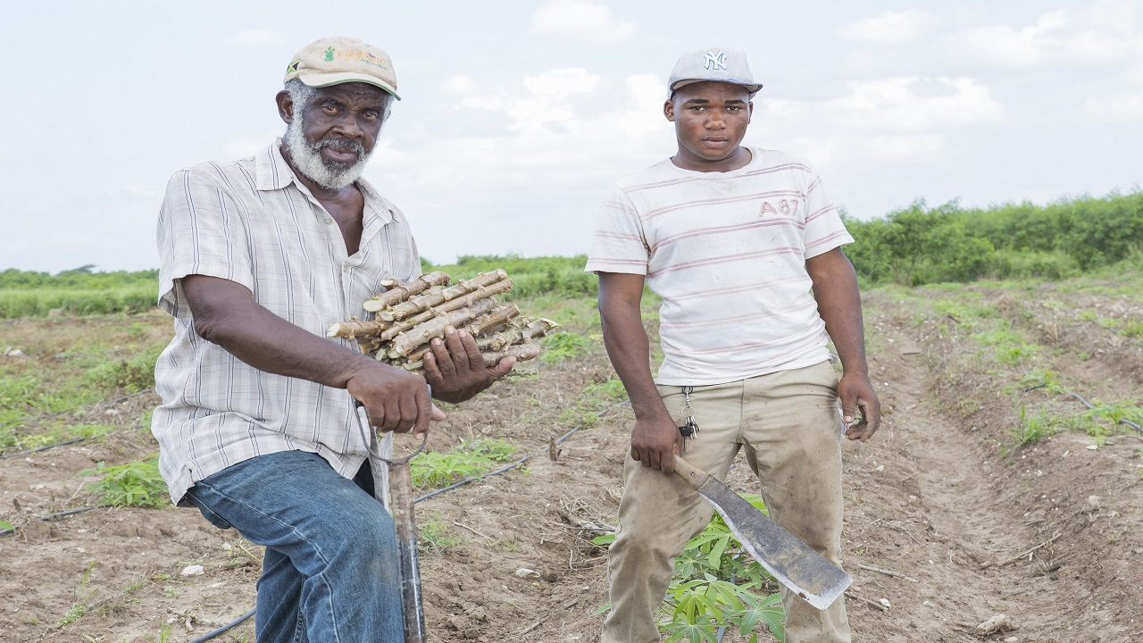 Carlton Fearon, who now farms alongside his 23-year-old grandson Oshane Williams, said that back in his younger days, farmers were able to make a decent living.