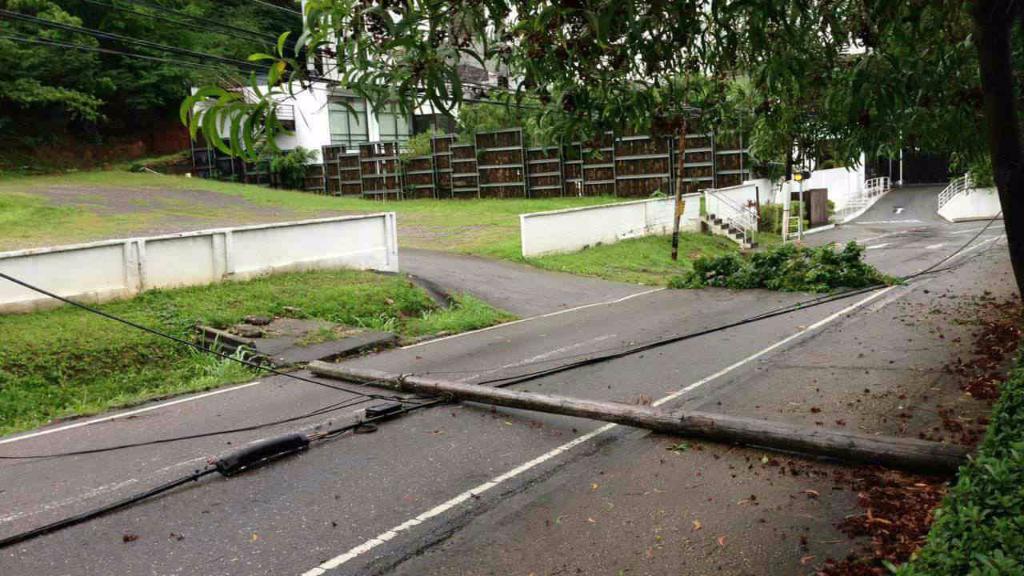 Fallen power line, Coblentz Garden, St Ann's