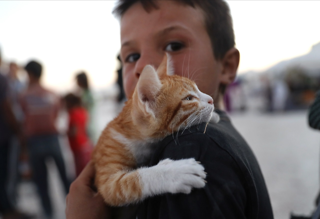 A Syrian displaced boy who fled with his family from the battle between U.S.-backed Syrian Democratic Forces and the Islamic State militants from Raqqa city, carries his cat at a refugee camp, in Ain Issa town, northeast Syria, Wednesday, July 19, 2017.