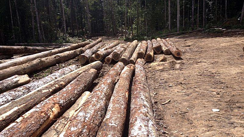Gekapt hout. Foto: De Surinaamse Krant/De Ware Tijd