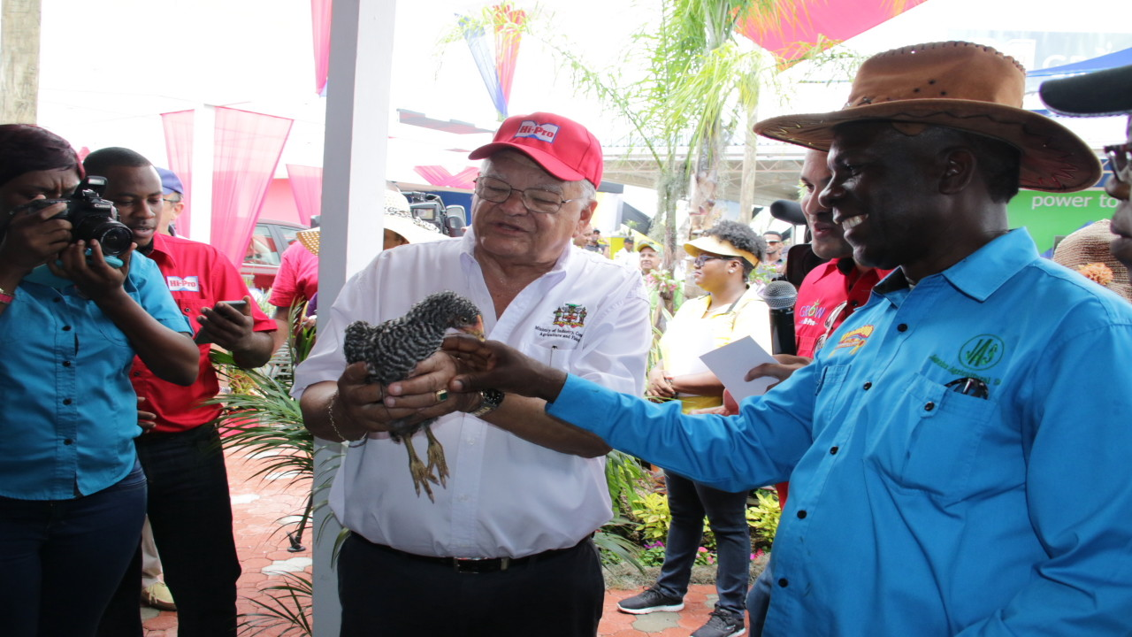 Jamaica Agricultural Society (JAS) president Norman Grant (right) and Agriculture Minister Karl Samuda examine a bird at the recent Denbigh show.