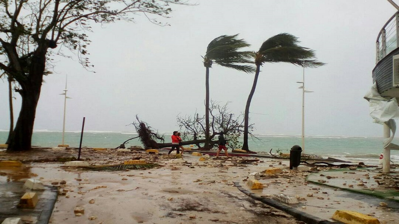 People walk by a fallen tree off the shore of Sainte-Anne on the French Caribbean island of Guadeloupe, early Tuesday, September 19, 2017, after the passing of Hurricane Maria. (AP Photo/Dominique Chomereau-Lamotte)