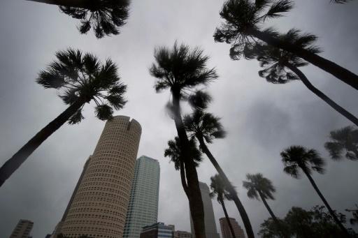 Des gratte-ciels et des palmiers à Tampa en Floride frappée par l'ouragan Irma le 10 septembre 2017