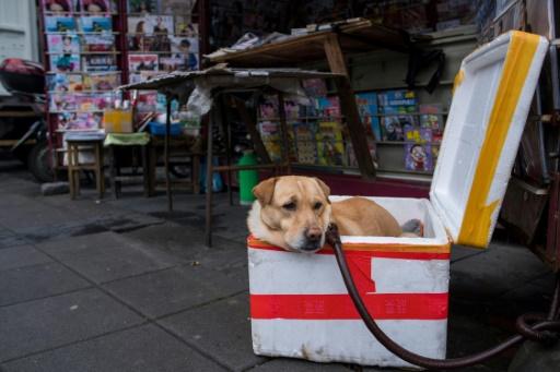 L'attitude envers les animaux a évolué en Chine alors que le nombre d'animaux domestiques augmente et que la classe moyenne se développe rapidement.