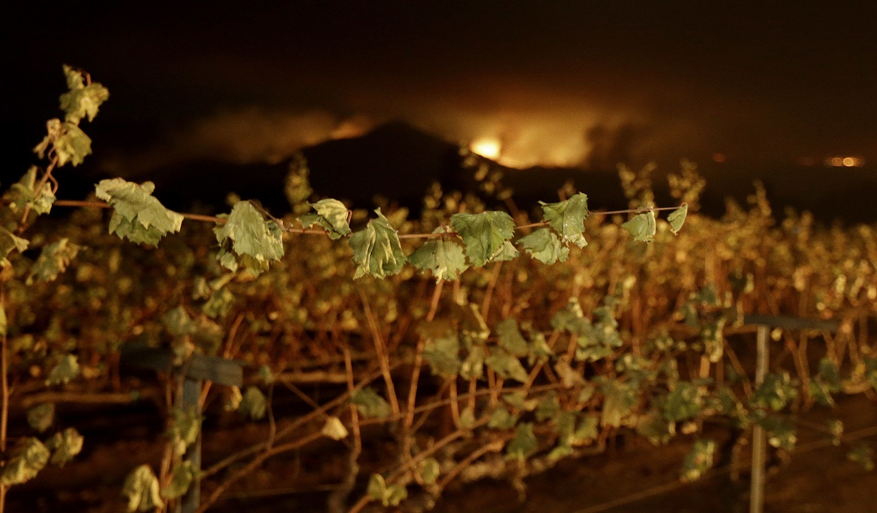 A wildfire from a distant mountain burns over a vineyard in Kenwood, Calif., Tuesday, Oct. 10, 2017.