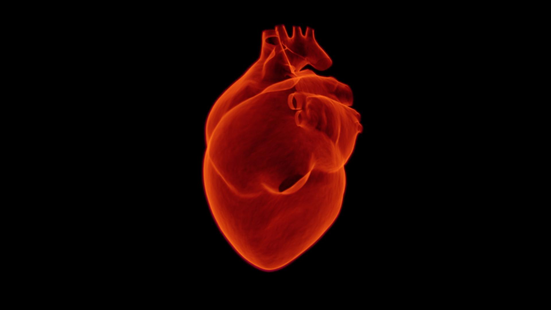 Volgens onderzoekers is het hart gedurende de middag het sterkst.