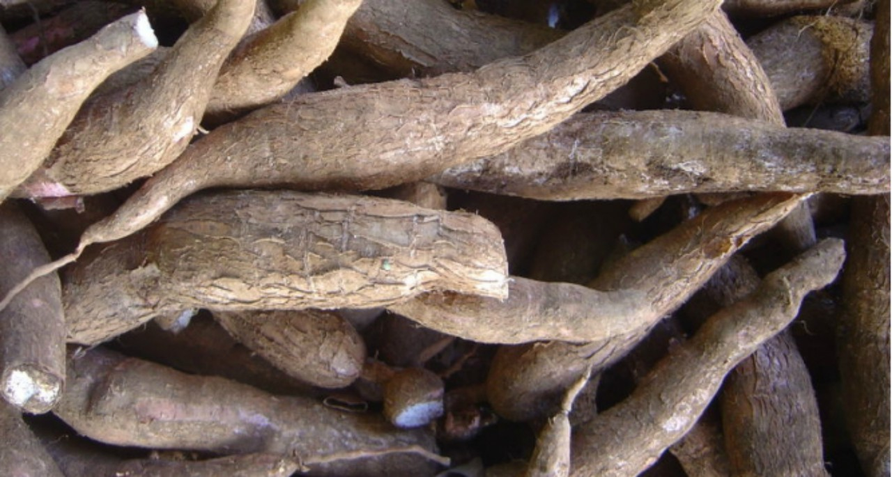Cassava (Internet image)