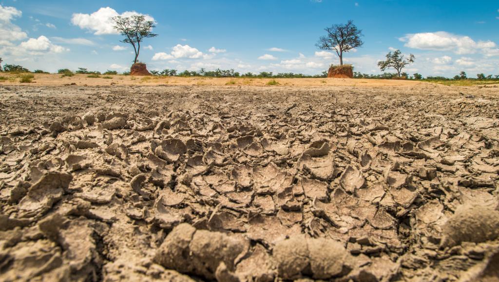 Cas de grande sécheresse au Botswana. Getty Images/Edwin Remsberg
