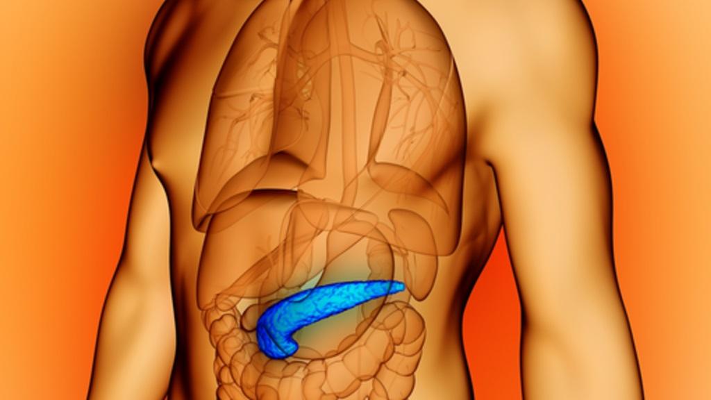 De alvleesklier is een belangrijk orgaan voor de spijsvertering.