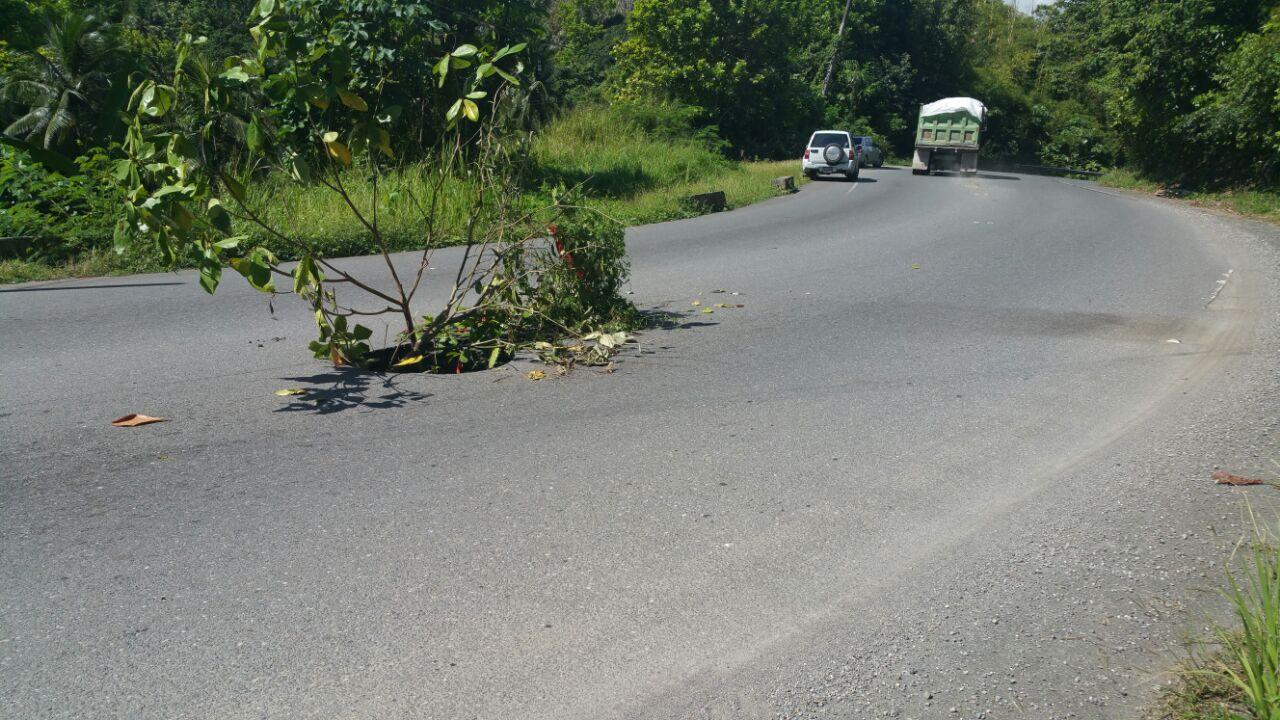 A hole in the middle of a section of the Northern Coastal Highway in St Mary, with branches used to alert approaching motorists of the danger ahead.