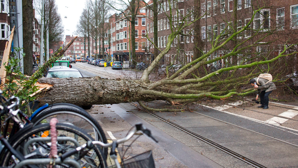Hundreds of flights scrapped as storm shuts Amsterdam's Schiphol airport