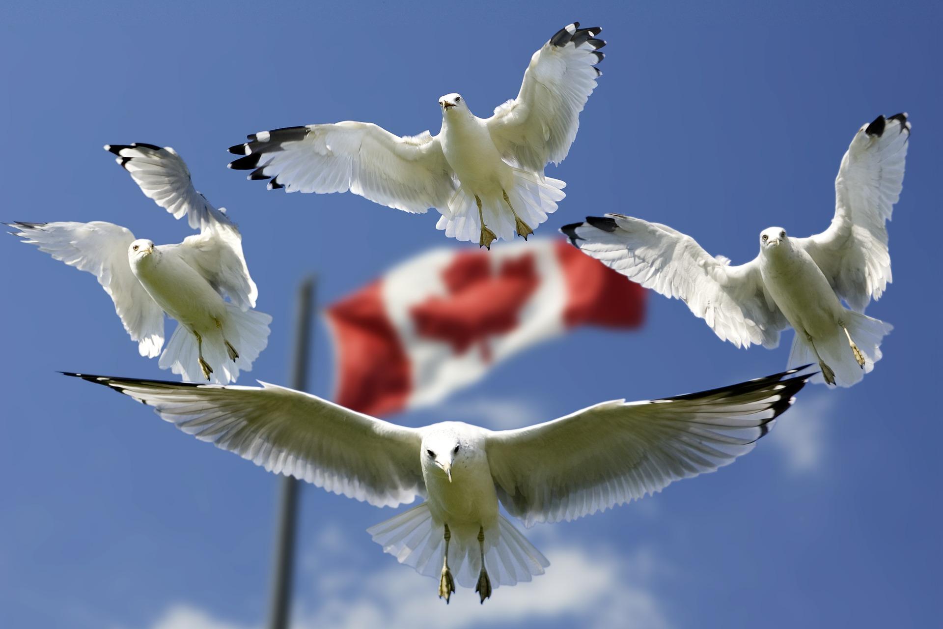 Canada: taux de chômage à 5,7% en décembre, plus bas depuis 42 ans. Photo : Frank Winkler