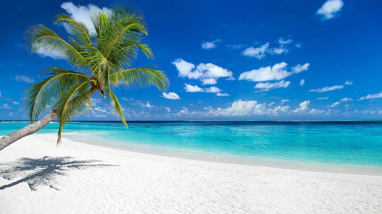 (File image of a tropicl beach via iStock)