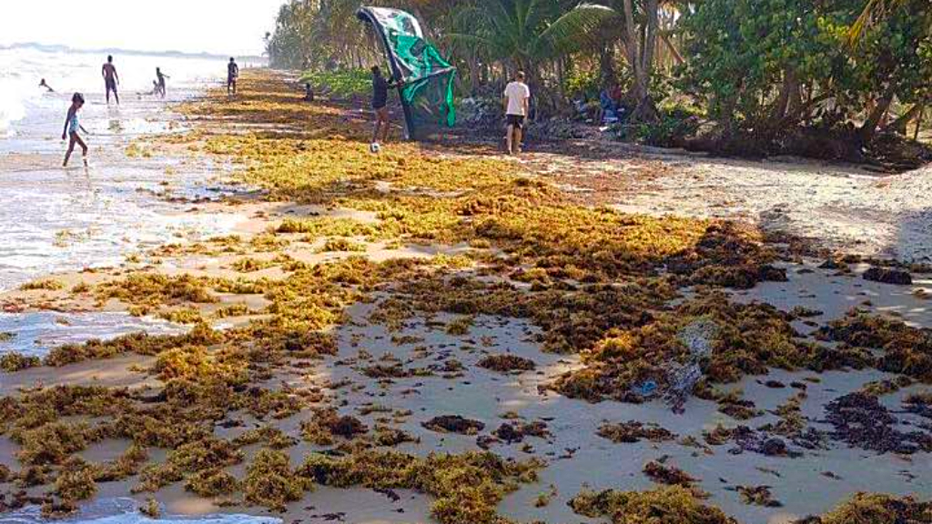 (Photo: Seaweed deposits seen in Mayaro in February 2018.)