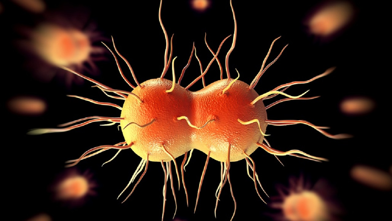 (File image from iStock of the bacteria that causes gonorrhea)