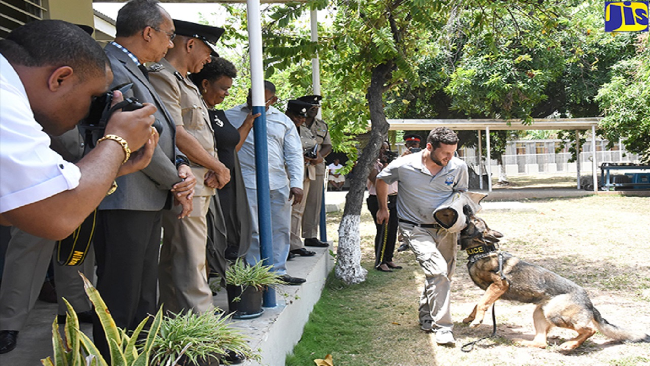 National Security Minister, Dr Horace Chang (second left), observes as main trainer with US-based dog-training company, Stellar K-9, Marcelo Montiel, demonstrates the complete obedience proficiency of one of the 61 highly trained dogs at the Jamaica Constabulary Force's (JCF) Canine Division. Others pictured from third left include Commissioner of Police, Major General Antony Anderson and Permanent Secretary in the National Security Ministry, Dianne McIntosh.