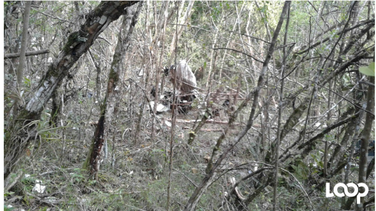 Remains of the crashed Cessna 206F aircraft are pictured in bushes near Duncans in Trelawny
