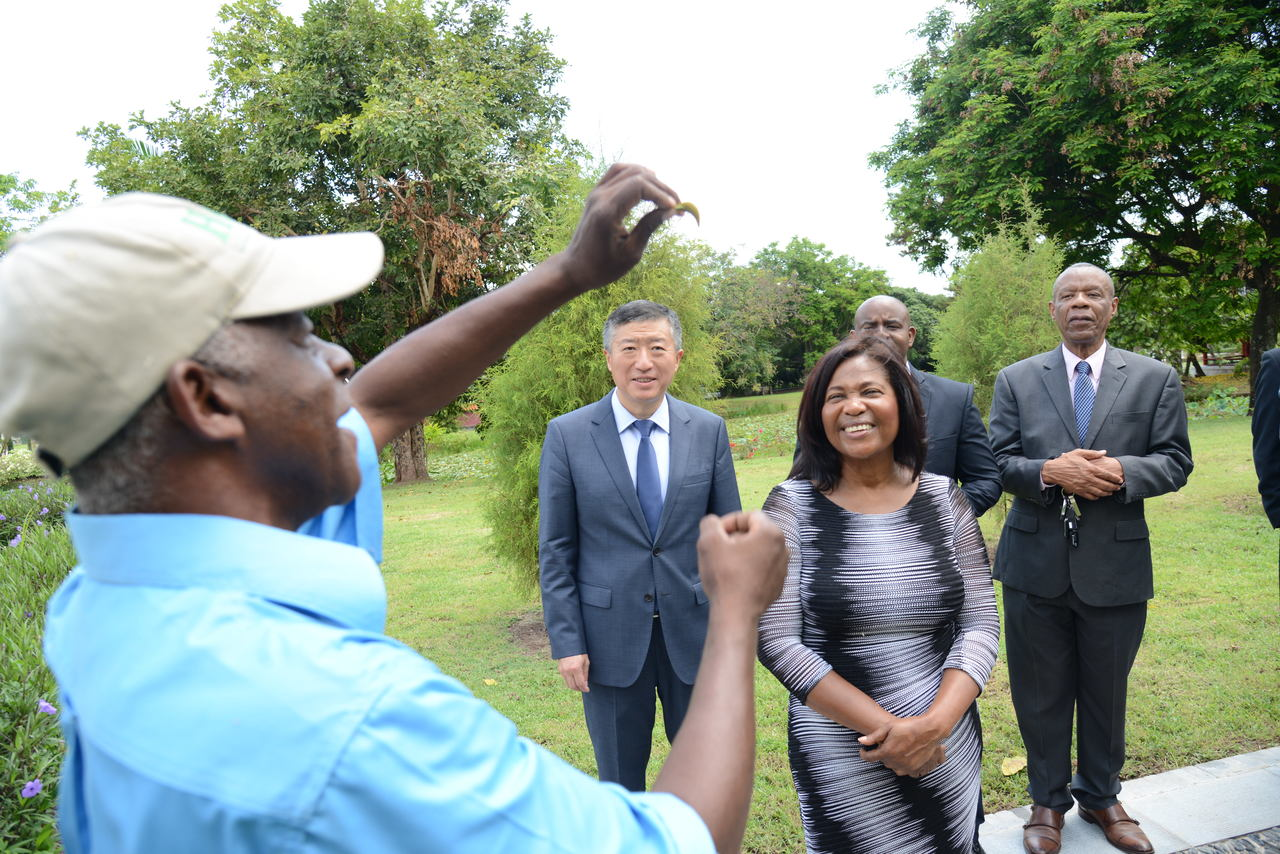 Tour guide for the Chinese Garden, Christopher Creary, shows the touring party, led  by Ambassador of The People's Republic of China to Jamaica, Tian Qi (left) and Lady Allen (right)  an African tulip that is found in the Chinese Garden.  In the background is Julian Patrick (centre), Director – Product Development and Community TPDCO and Alfred Thomas (right), Chairman of Nature Preservation Foundation, operators of the Hope Gardens.