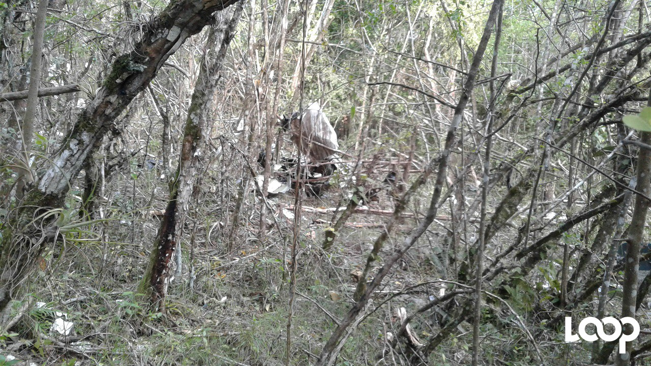 Remains of the crashed Cessna 206F aircraft are pictured in bushes near Duncan's in Trelawny.