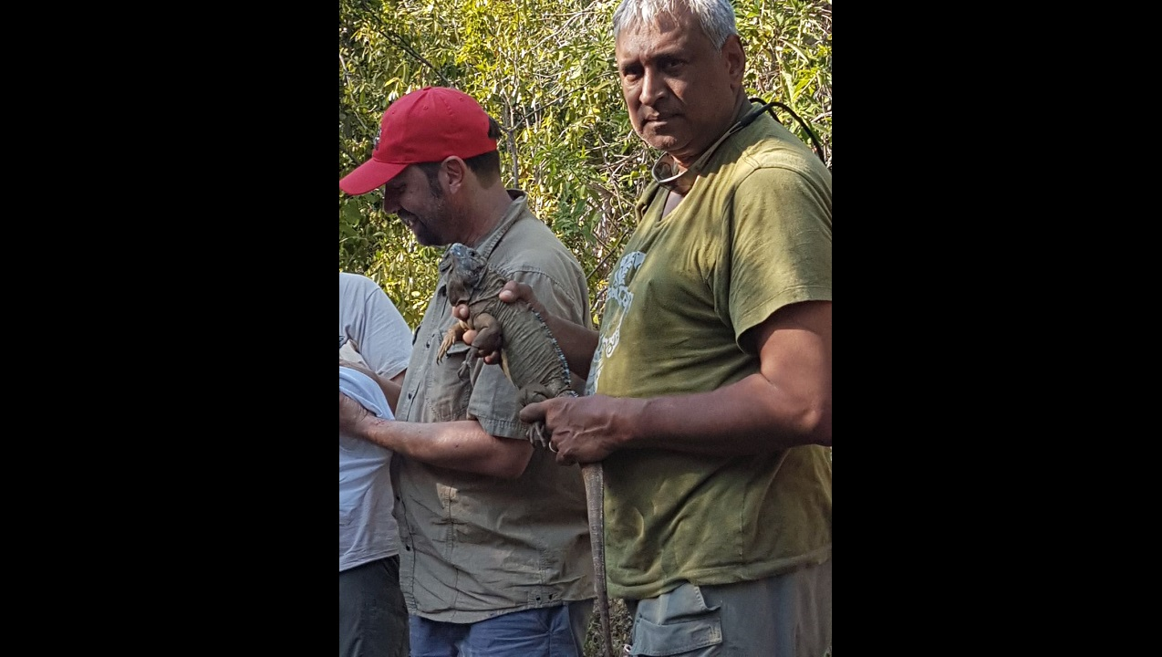 John Seyjagat (right), Director, Zoo Association of America gets ready to release into the Hellshire hills in St Catherine, one of the iguanas that was reared at the Hope Zoo as part of its head start programme for the critically endangered reptile. At left is Milton Rieback, Curator of the Hope Zoo.