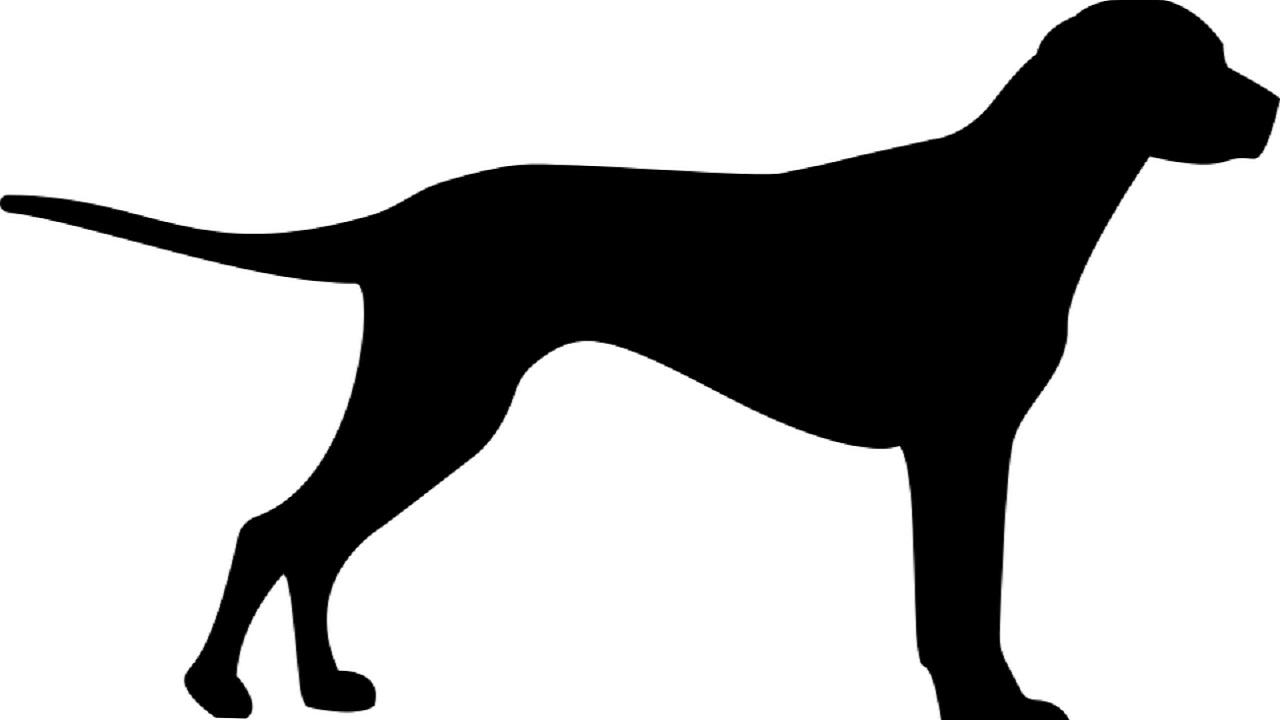 (File image of a dog)