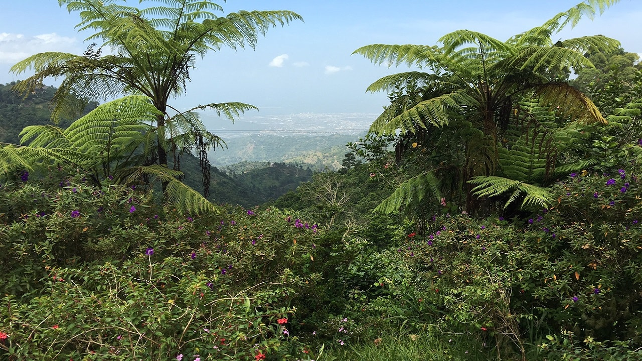 (Image: Blue Mountains, Jamaica)