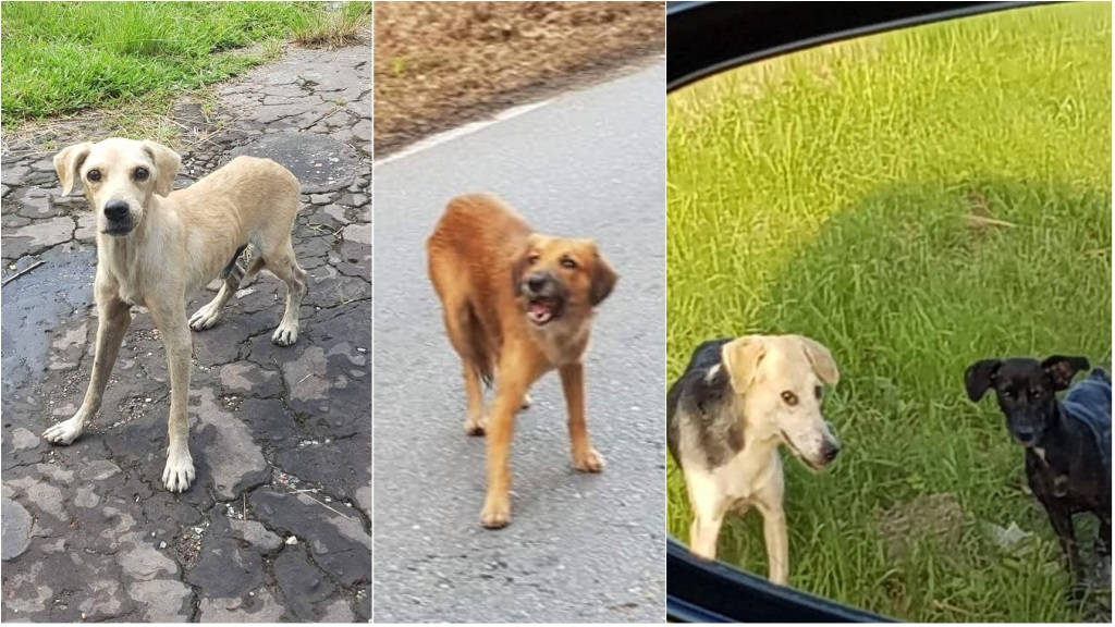 Photo: Local animal welfare group FURever Homes For Abandoned Animals said dogs were seen wandering in a lonely area along Petrotrin field road.
