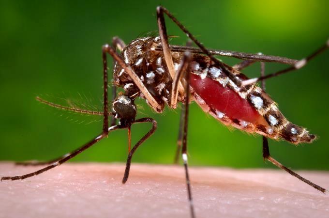 Les Haïtiens ont apporté le virus Zika au Brésil, selon une étude