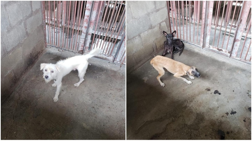 Photo: A committee has been set up after dogs were again delivered to the San Fernando dog pound, which had been closed last year after viral videos of inhumane treatment.