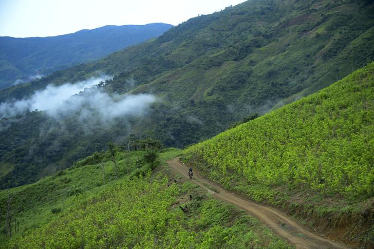 Une plantation de coca à Pueblo Nuevo, le 10 juillet 2016 en Colombie