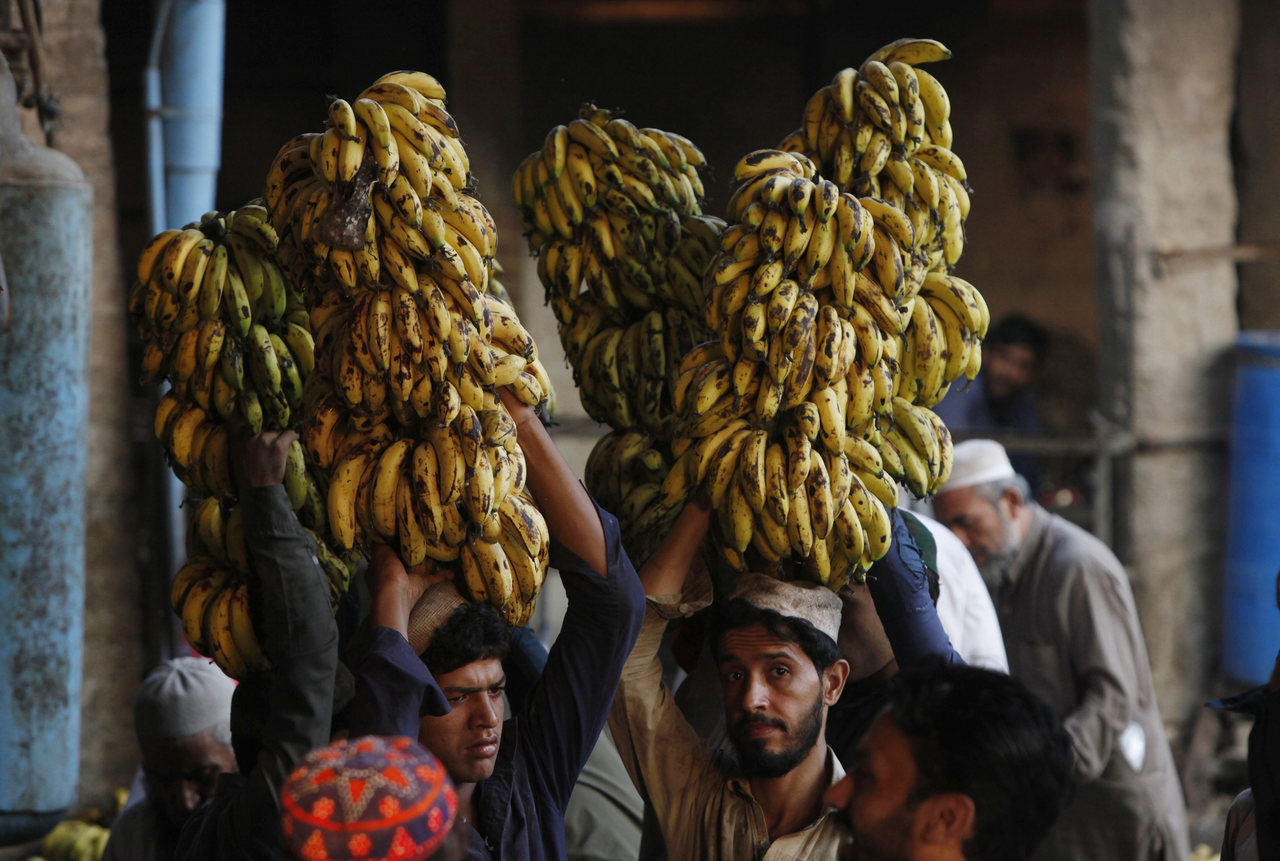Vendors carry banana on their heads at a fruit and vegetable market in Peshawar, Pakistan. (AP Photo)