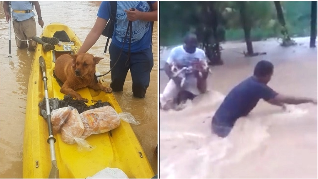 Photo L-R: Gabby was rescued from flood waters over the weekend, while in Mayaro, Manzanilla councillor Kenwyn Phillip and Neal Edwards rescued two dogs from flood waters. Flood relief efforts are still underway. If you can assist please contact your local councillor or regional corporation.