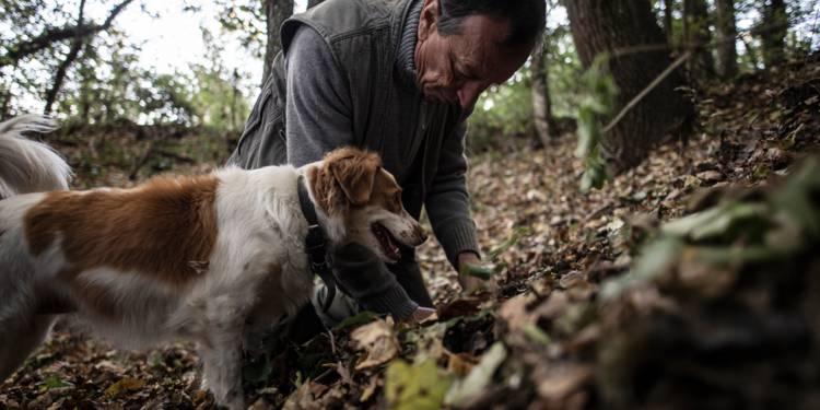 Giovanni Monchiero entraîne le chien Rocky à trouver des truffes, le 24 octobre 2018 à Roddi, en Italie