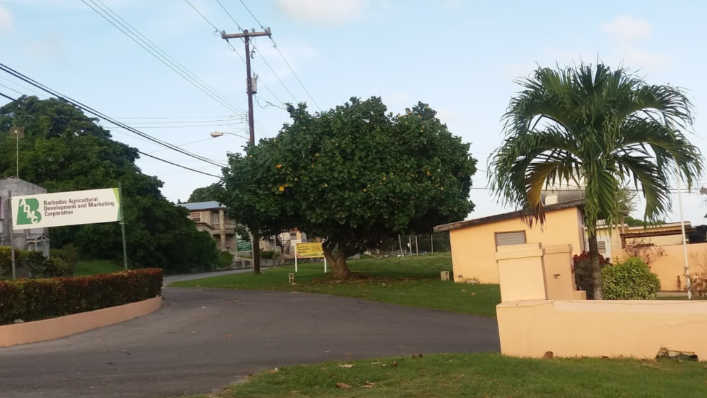 Barbados Agricultural Development and Marketing Corporation's (BADMC) Fairy Valley branch.