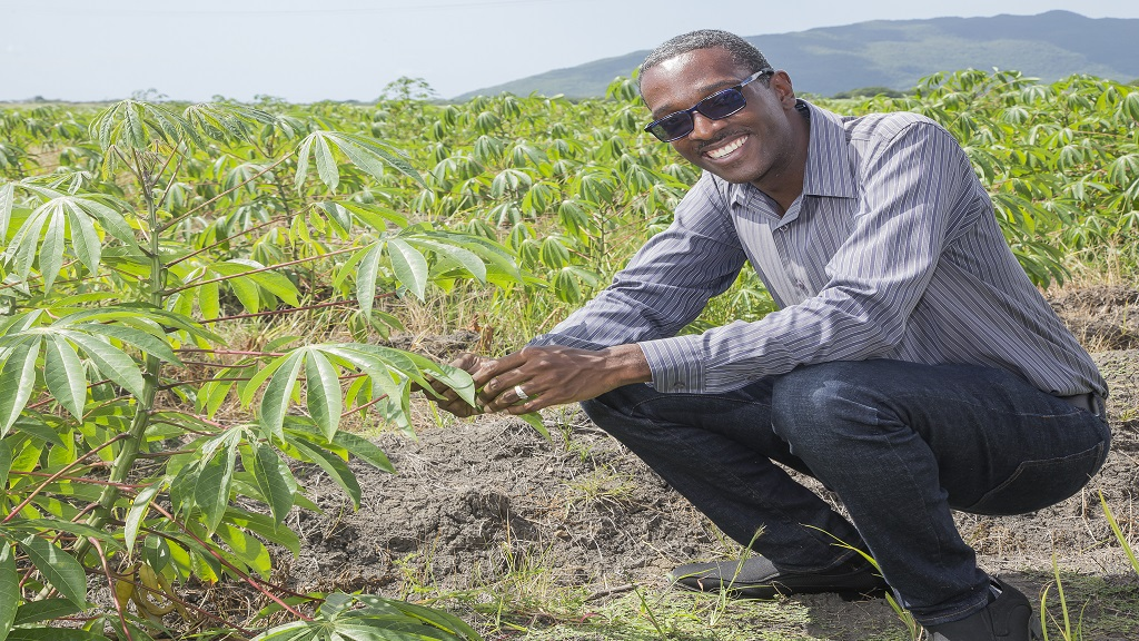 Mark Williams inspects his cassava plant that is expected to mature in April 2019. He currently has 30 acres of land in under cultivation in Gimme-mi-Bit, Clarendon, and hopes to increase to 73 acres by next year.