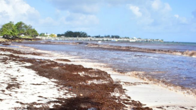 Sargassum strangling South Coast hoteliers | Loop News