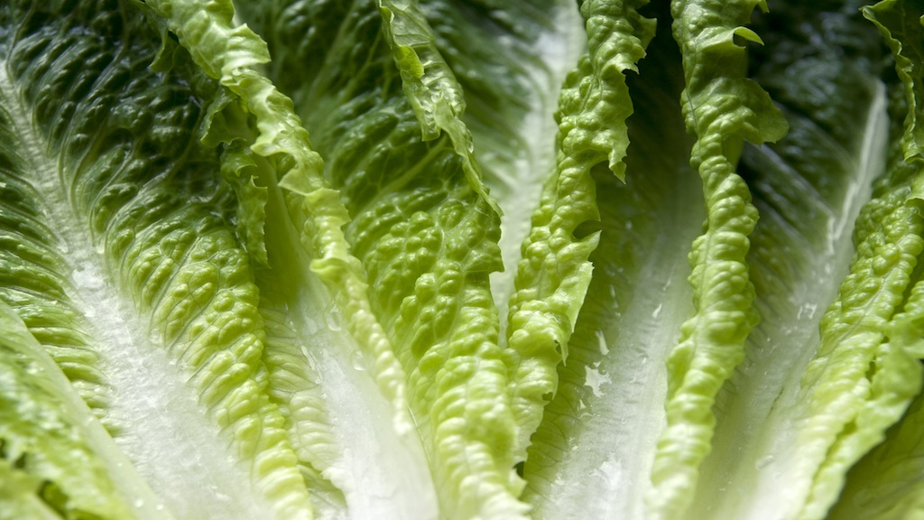 Romaine calm: Lettuce alert, turkey warning loom over Thanksgiving dinner