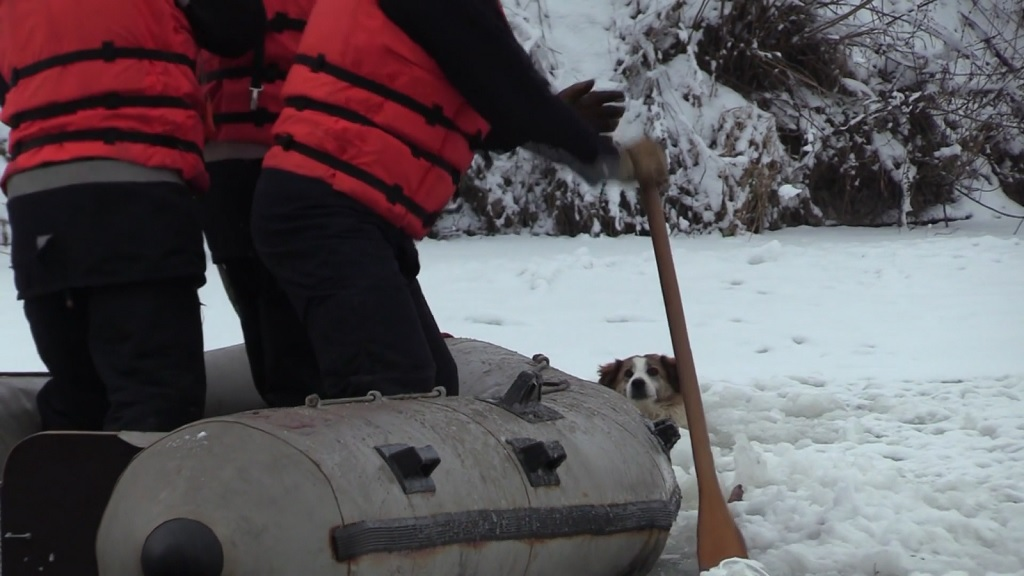Photo: A dramatic scene ensued after a dog which had been trapped in a frozen river for hours was rescued by villagers in Romania.