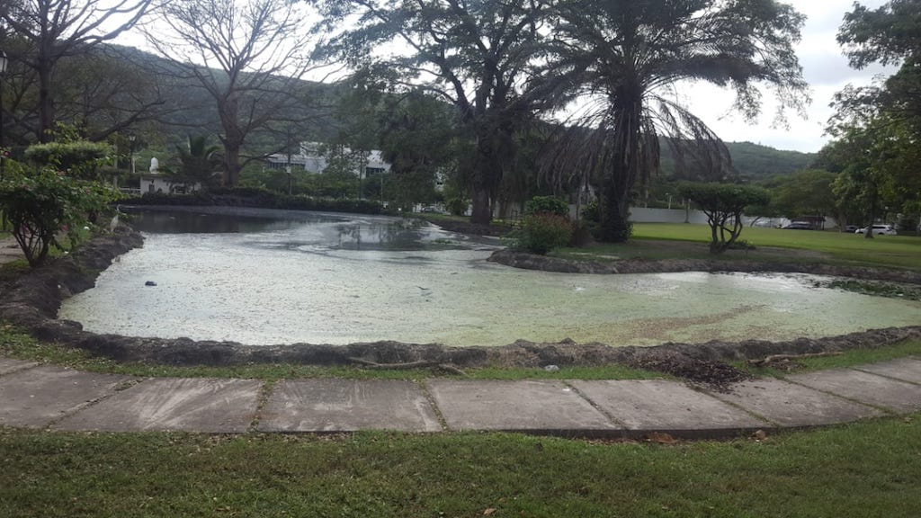 The pond in which Dr Judith Rose Spencer was found dead on Monday.
