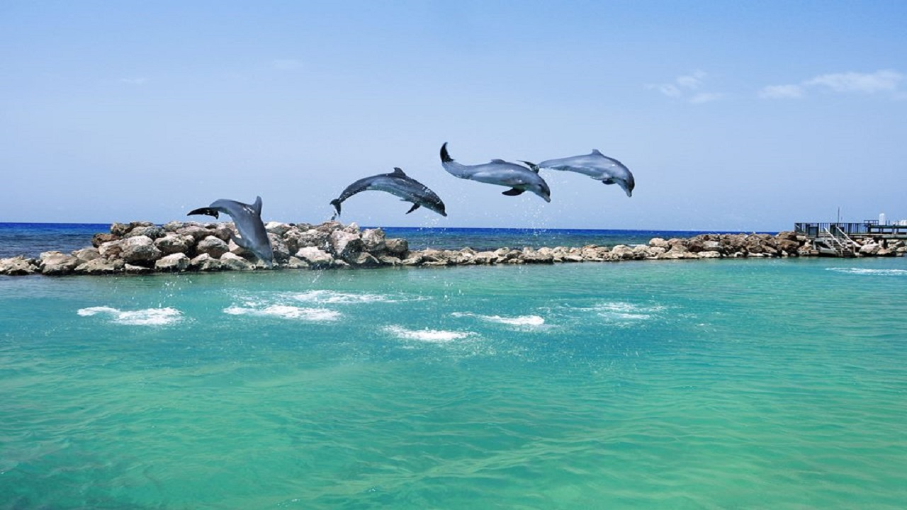 Photo of dolphins at Dolphin Cove Montego Bay, via the company's Facebook page.