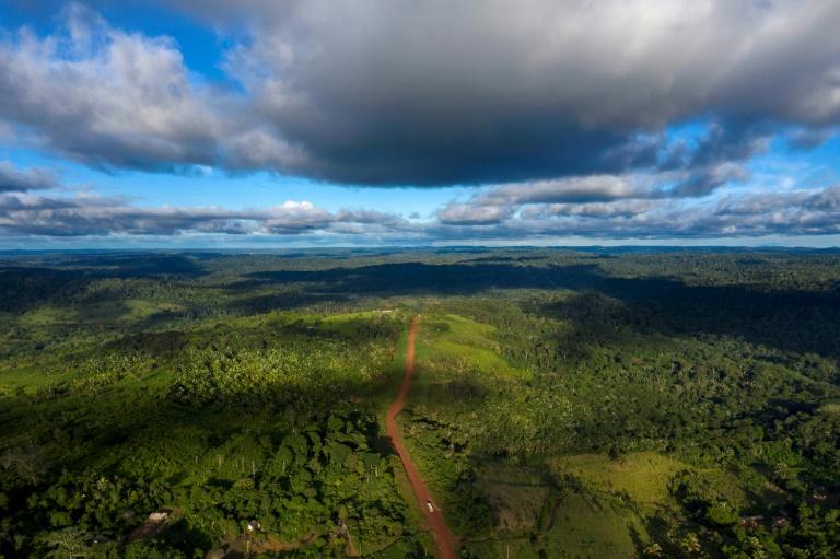 """Vue aérienne de la transamazonienne, une route inachevée déjà percée sur 4.000 km à travers le """"poumon de la planète"""", le 13 mars 2019"""
