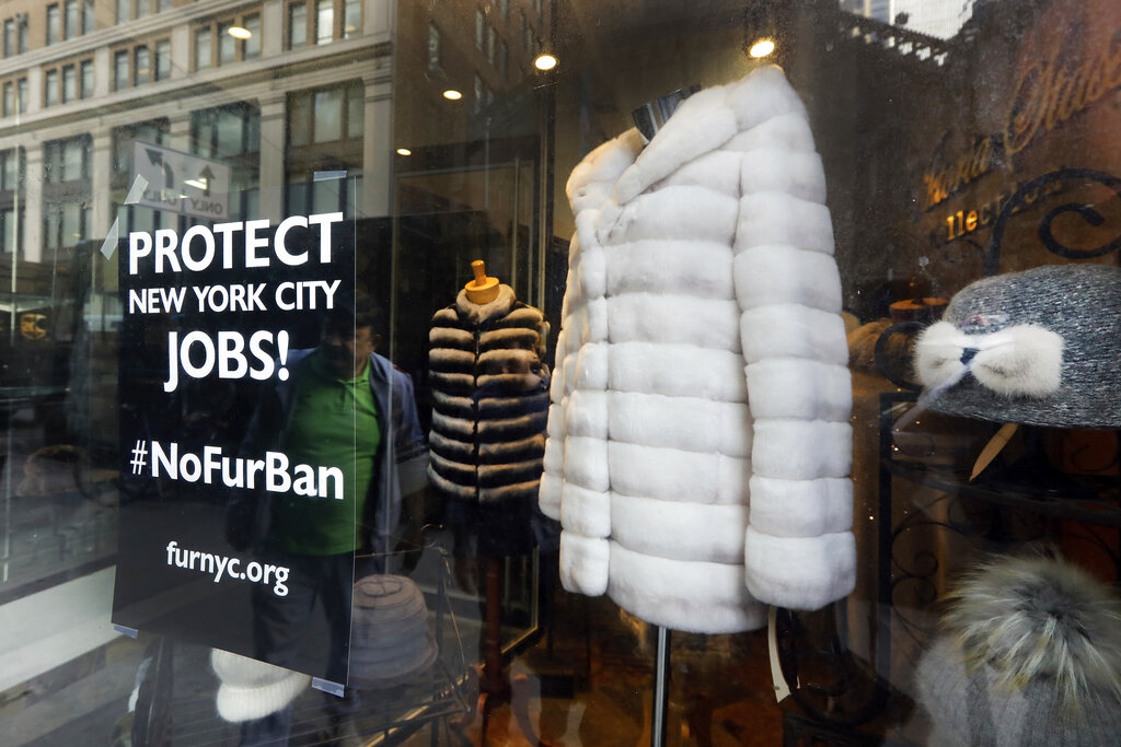 ️This April 10, 2019, photo shows a sign by furnyc.org in the window of Victoria Stass Collection in New York's fur district. The fur trade is considered so important to New York's development that two beavers adorn the city's official seal, a reference to early Dutch and English settlers who traded in beaver pelts. (AP Photo/Richard Drew)