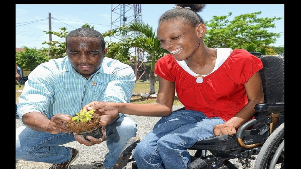 Shanice Shaw, Resident of Jerusalem! Home, assists Rohan Williams, Technology Manager of IGT Jamaica in unwrapping a Duranta Gold tree for planting at a pre-Labour Day exercise held recently.