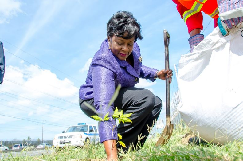 Planning Minister plants a tree in Port-of-Spain for World Environmental Day 2017, celebrated on June 5.