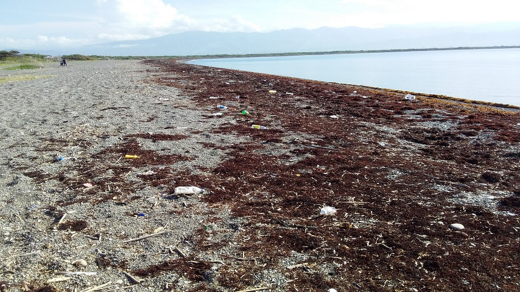 Some beaches across the island, particularly in Portland and St Catherine, are already being heavily impacted by the seaweed. (PHOTO: contributed)