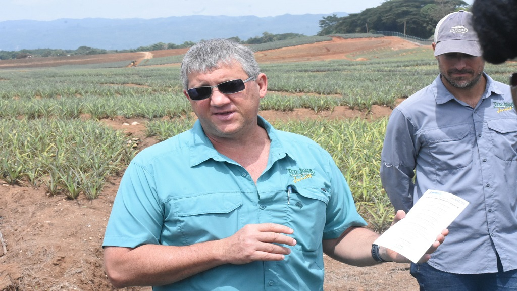 Peter McConnell, managing director at Trade Winds during a tour of the company's pineapple farm. (Photo: Marlon Reid)