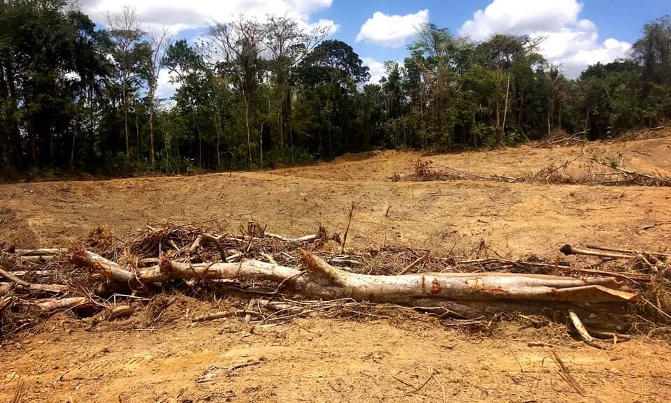 Photo: Approximately 300 acres of forest reserves in Tableland were cleared by illegal farming practices, according to photos shared by Minister of Agriculture, Lands and Fisheries, Clarence Rambharat. In 2019 fines for illegal clearing of state lands were increased to $50,000 and 10 years jail time.