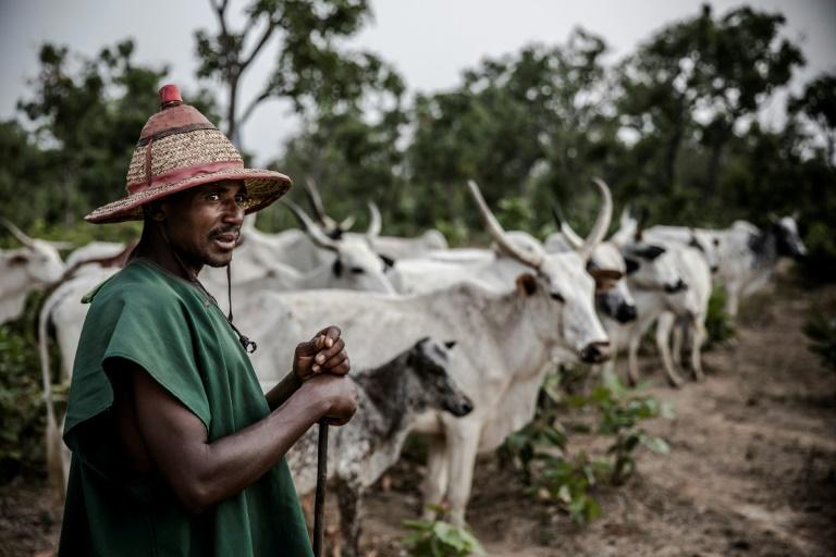 Des fermiers peuls font avancer leur bétail dans les environs de Sokoto, au Nigeria, le 22 avril 2019